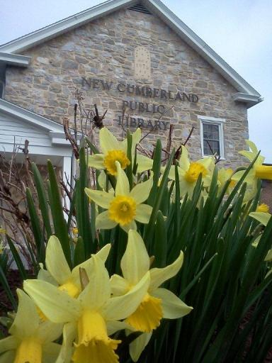 Photo of New Cumberland Library framed by daffodils