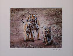 Tadoba Tiger Stroll