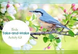 Bluebird sitting in nest in flowering tree