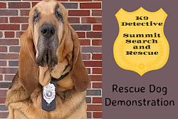 bloodhound with detective badge